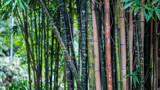 Why Bamboo is Used as a Building Material