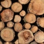 Common timber in India