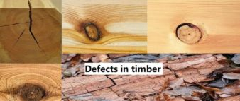 Defects in timber | Causes of timber defects
